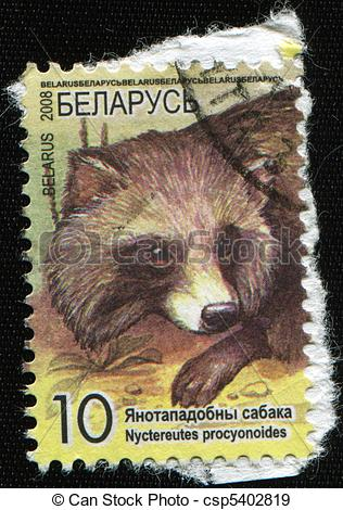 Stock Photographs of Raccoon dog, Magnut or Tanuki.