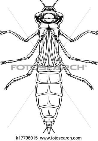Clipart of A dragonfly nymph k17796015.