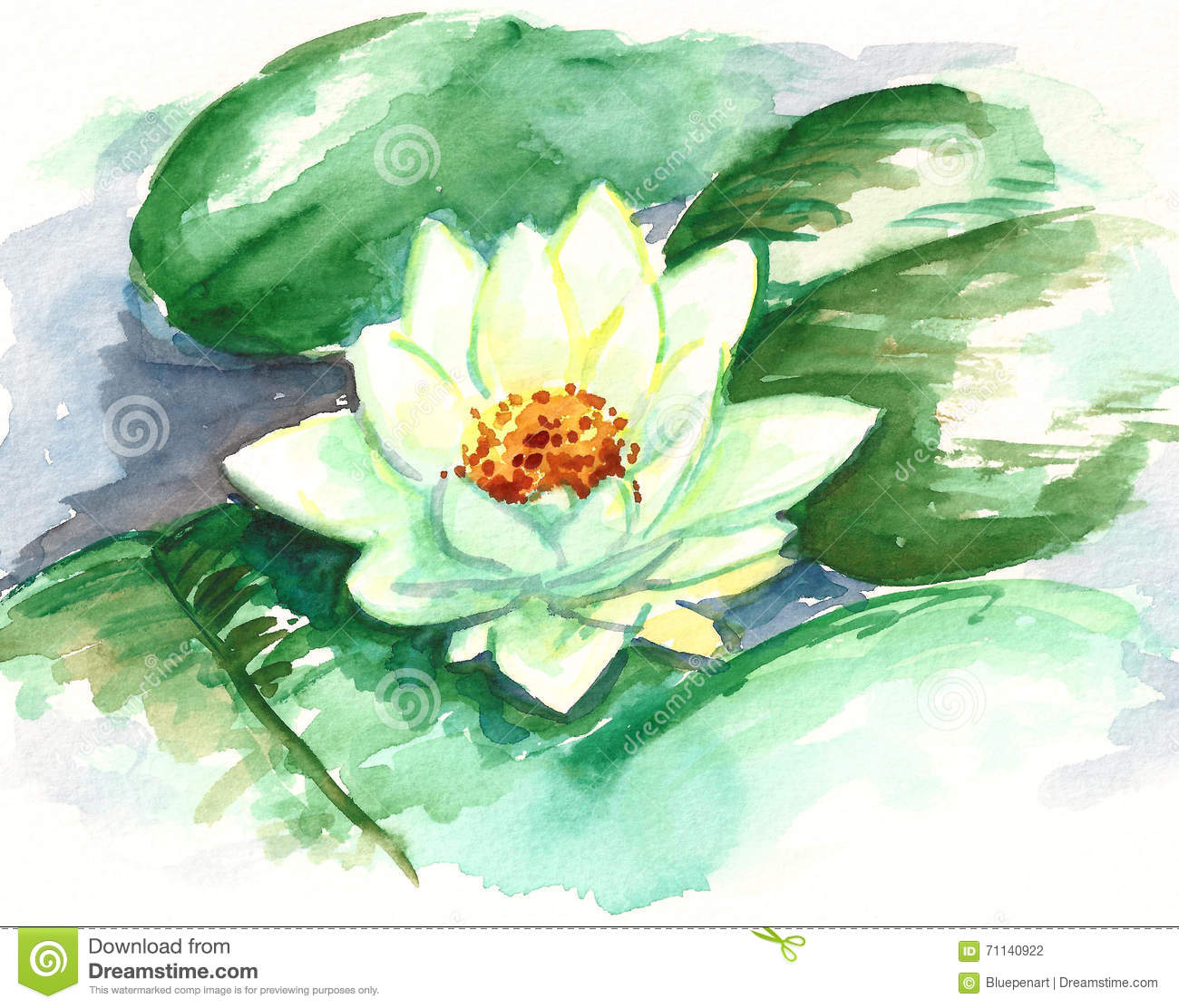 Watercolor Lotus Flower, Water Lily, Nymphaea Alba Stock.