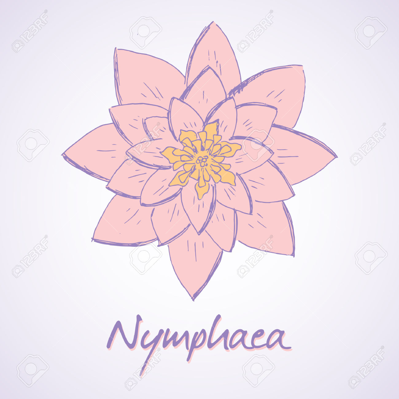 Vector Sketch Illustration Of Lily Nymphaea Royalty Free Cliparts.