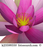 Nymphaea Clip Art and Stock Illustrations. 49 nymphaea EPS.