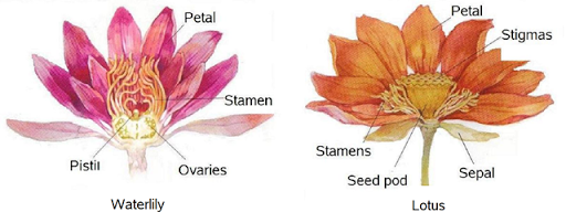 Simple Expressions: Is lotus different from water.