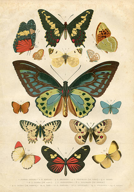 Nymphalidae Clip Art, Vector Images & Illustrations.