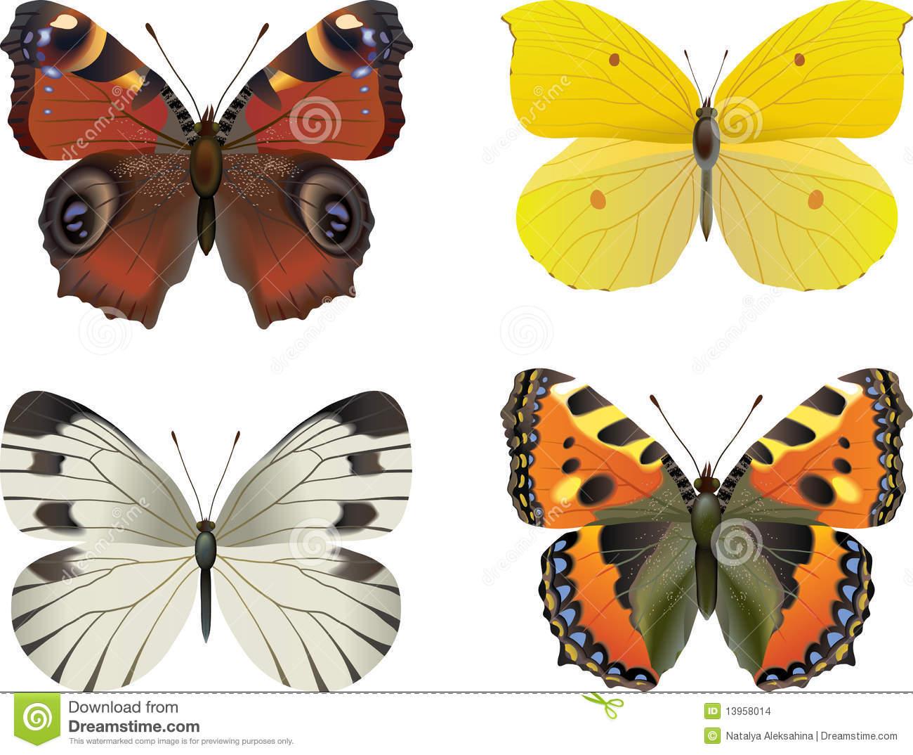 Nymphalidae Stock Illustrations.