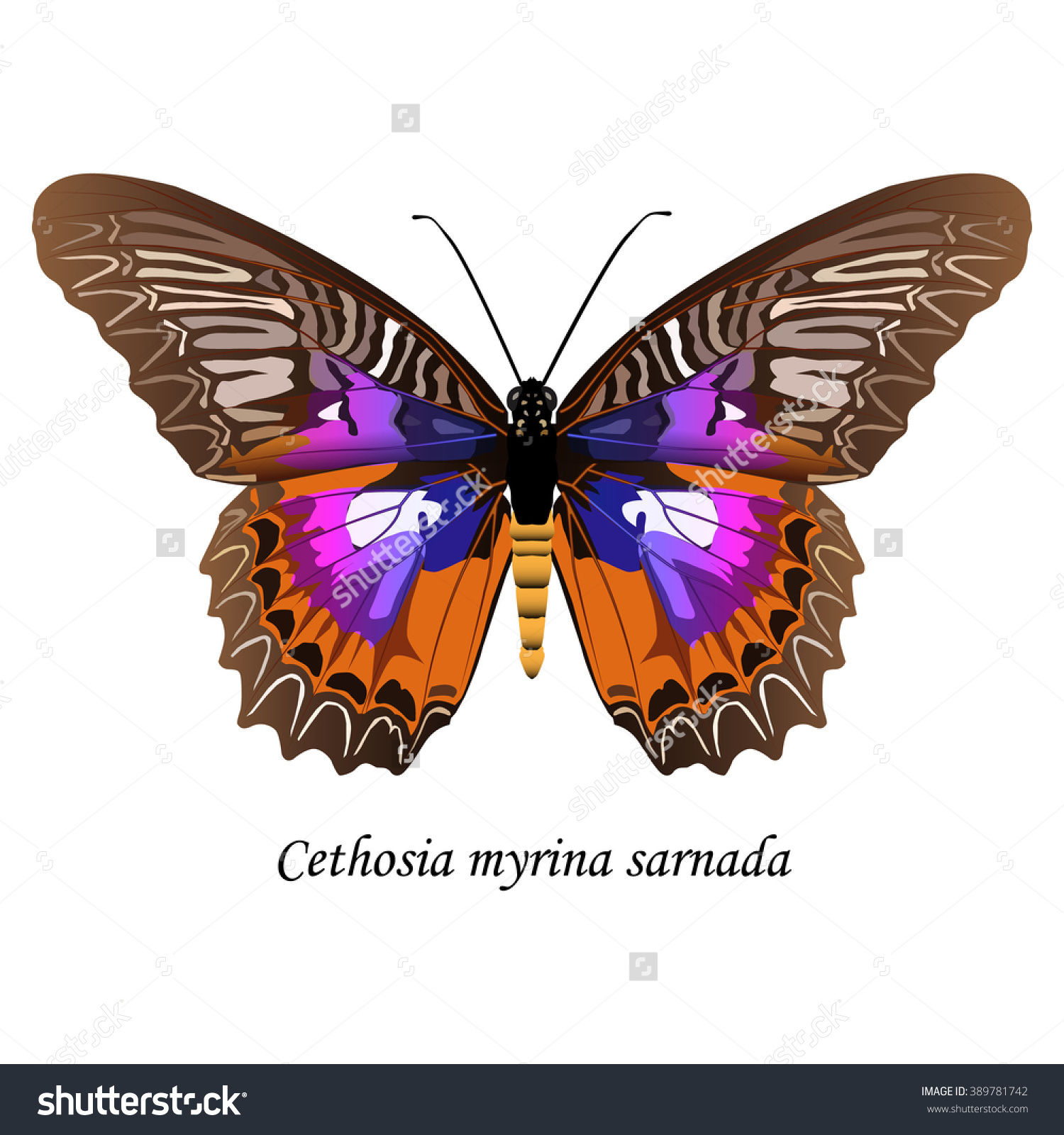 Illustration Sulawesi Butterfly Nymphalidae Family Cethosia Stock.
