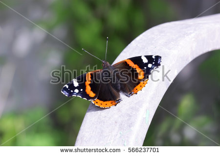 Nymphalidae Stock Images, Royalty.