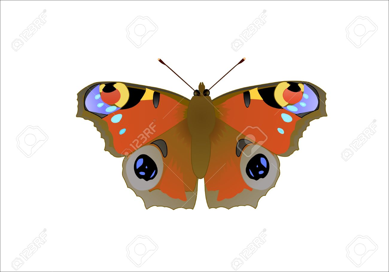 Butterfly Nymphalis Io L, Vector Illustration Royalty Free.