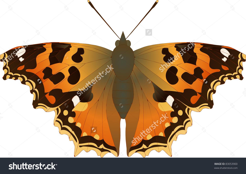 Collection Of Butterflies: Nymphalis Vaualbum Compton.