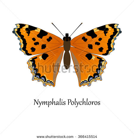 Nymphalis Stock Photos, Royalty.