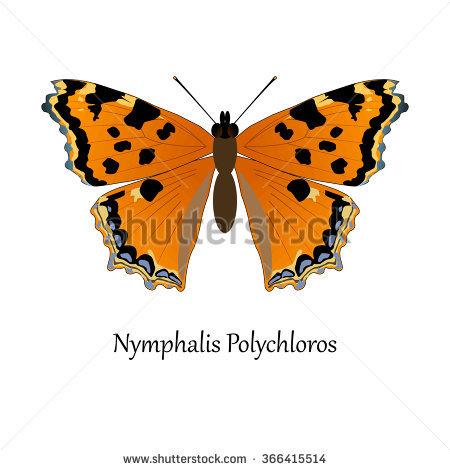 Nymphalis Stock Photos, Royalty.