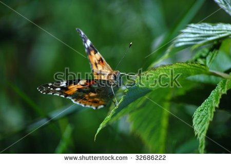 "butterflies Of Europe"" Stock Photos, Royalty."