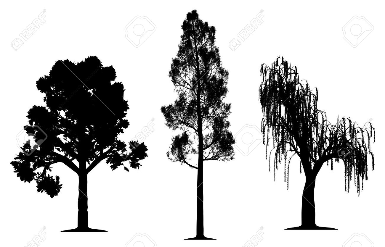 Oak, Forest Pine And Weeping Willow Tree Royalty Free Cliparts.