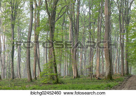 "Stock Photography of ""Oak forest of Moladiers towards Moulins."