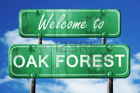 15,582 Oak Forest Stock Vector Illustration And Royalty Free Oak.