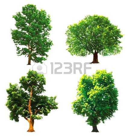16,431 Oak Forest Stock Vector Illustration And Royalty Free Oak.