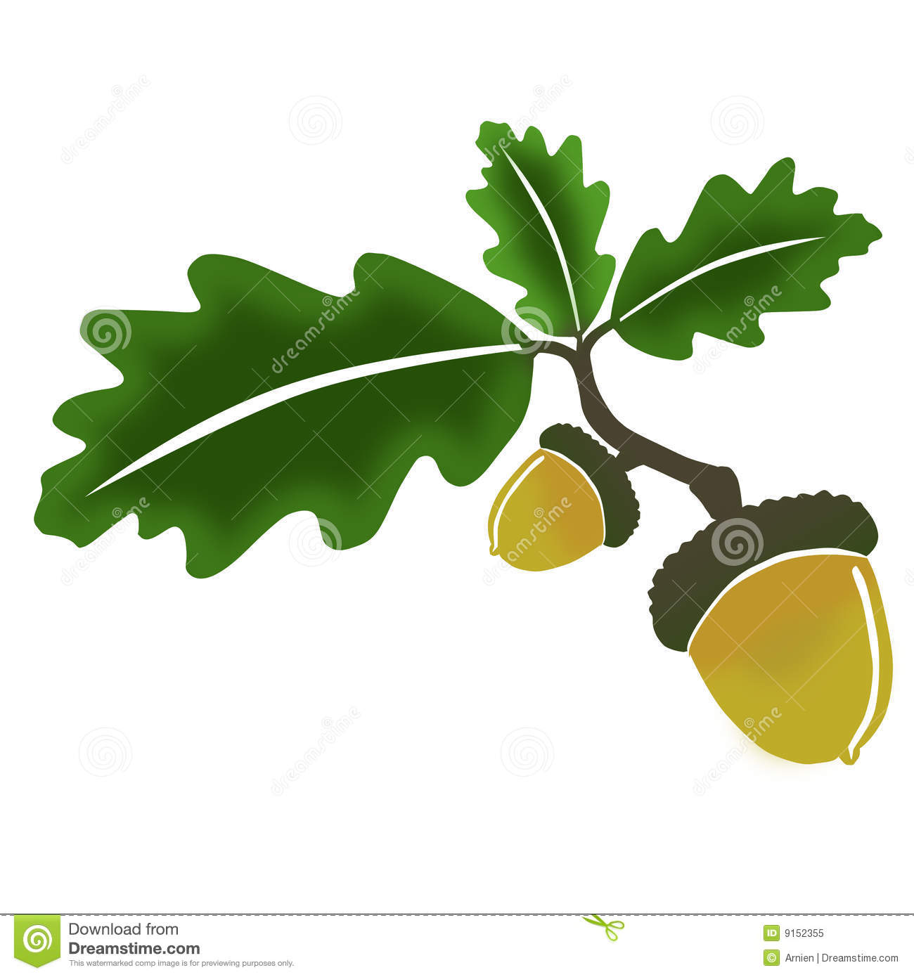 Oak fruit clipart.
