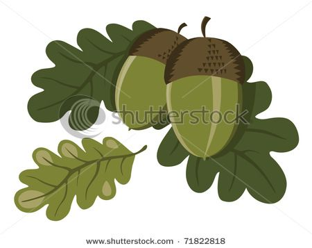 Oak Tree With Acorns Clip Art Green fresh acorns with oak.