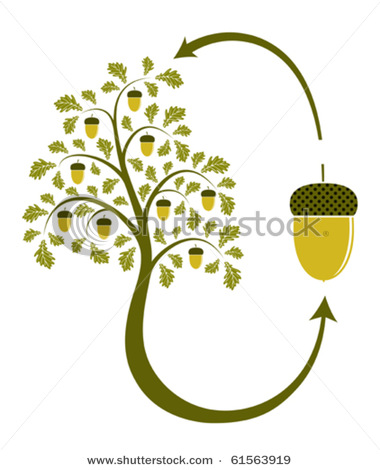 Oak fruit clipart.