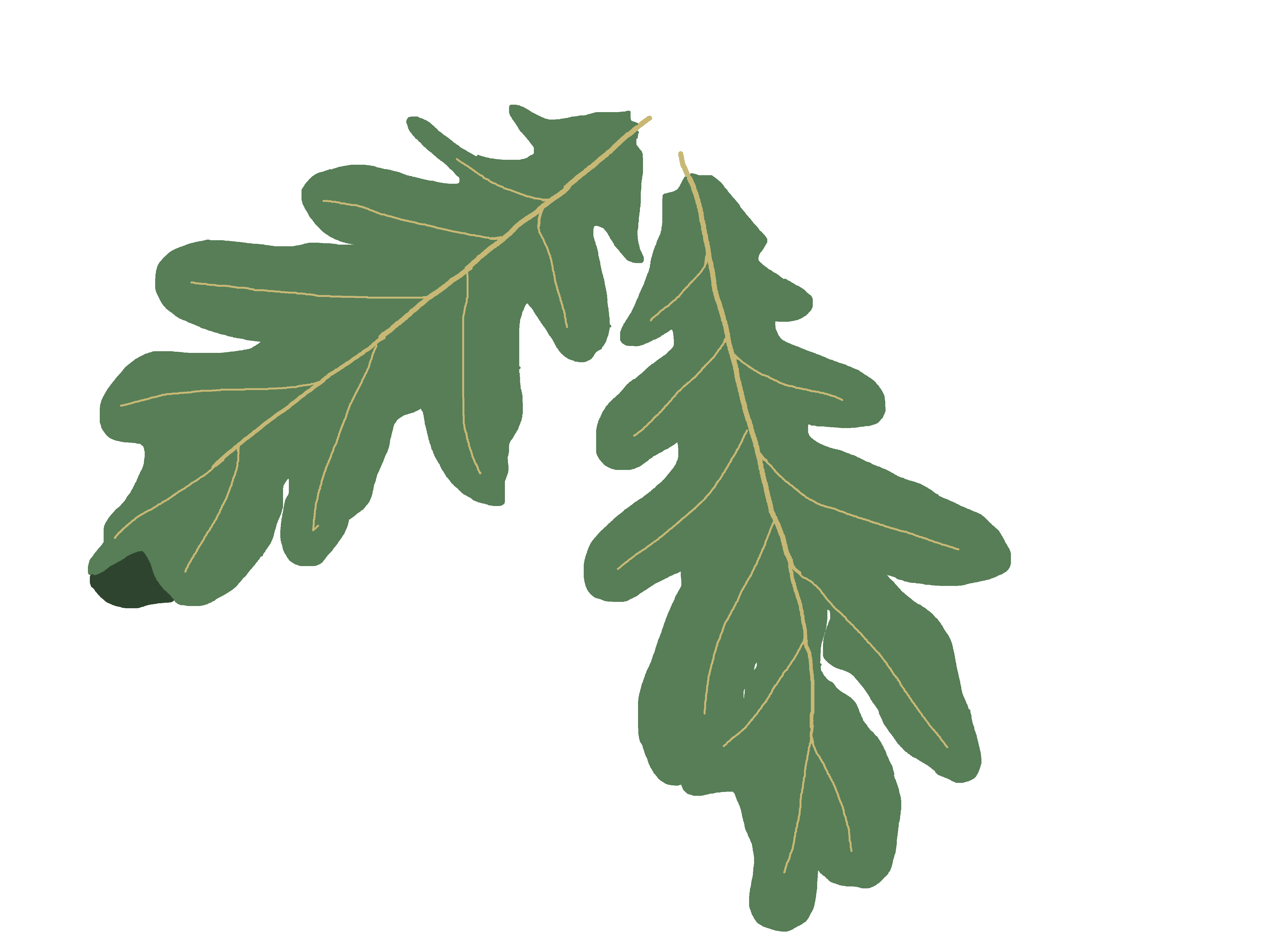 Oak leaf green clipart.