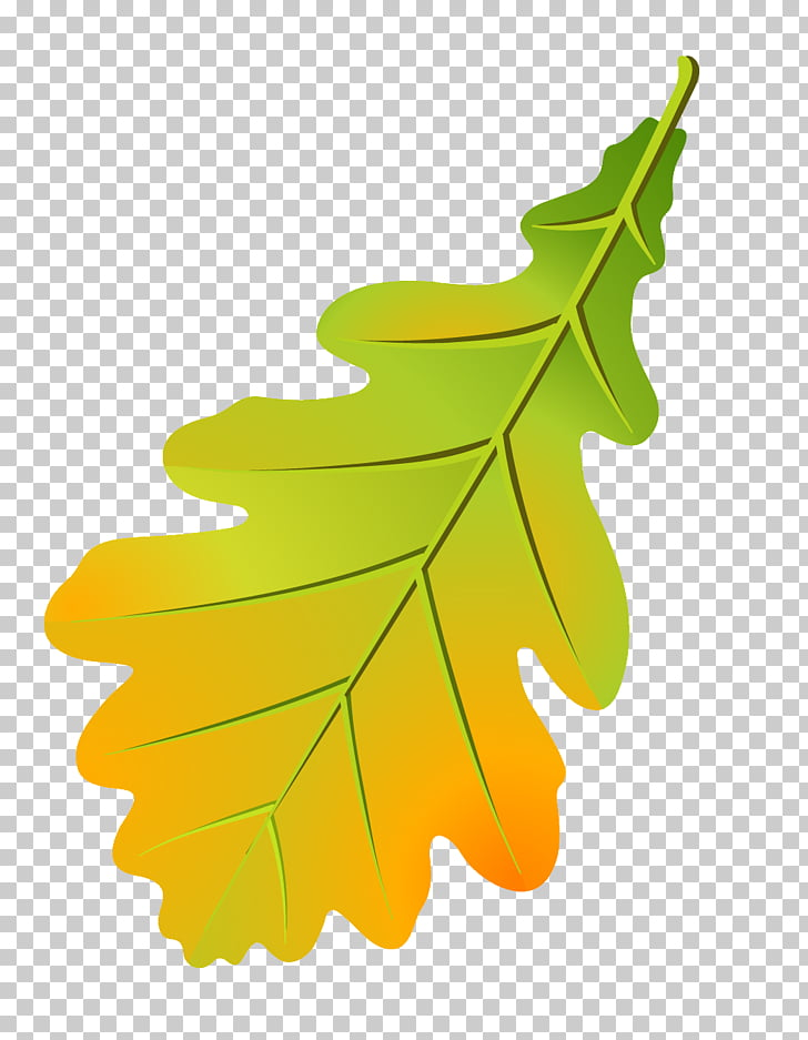 Oak leaf cluster Tree Leaflet Autumn leaf color, Leaf PNG.