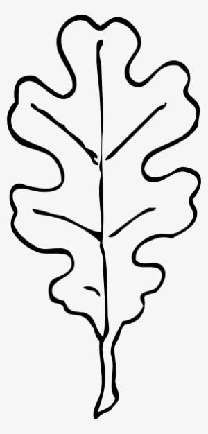 Oak Leaf PNG, Transparent Oak Leaf PNG Image Free Download.