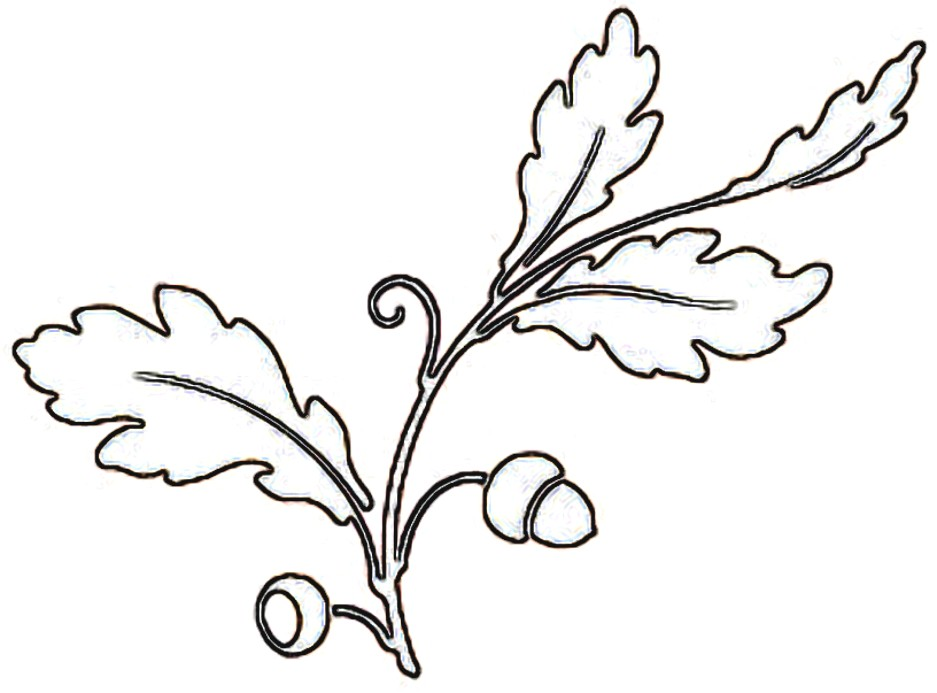 Free Oak Leaf Outline, Download Free Clip Art, Free Clip Art.