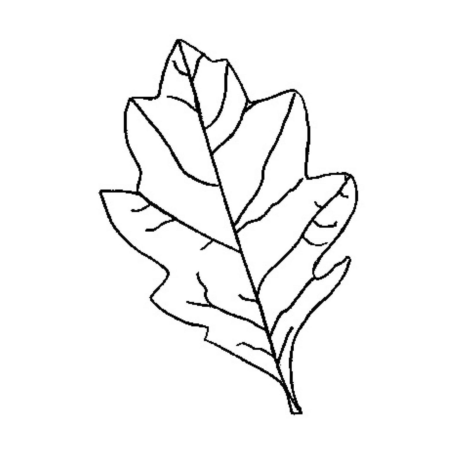 Free Oak Leaf Outline, Download Free Clip Art, Free Clip Art.