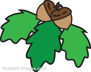 Clipart of Oak Leaves With Acorns.