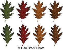 Oak leaf Clip Art and Stock Illustrations. 10,945 Oak leaf EPS.