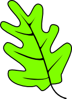 Oak leaf green clipart.