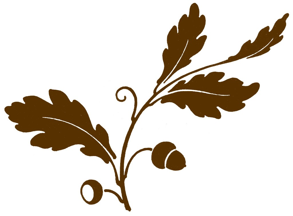 Oak Nut Clipart Design.