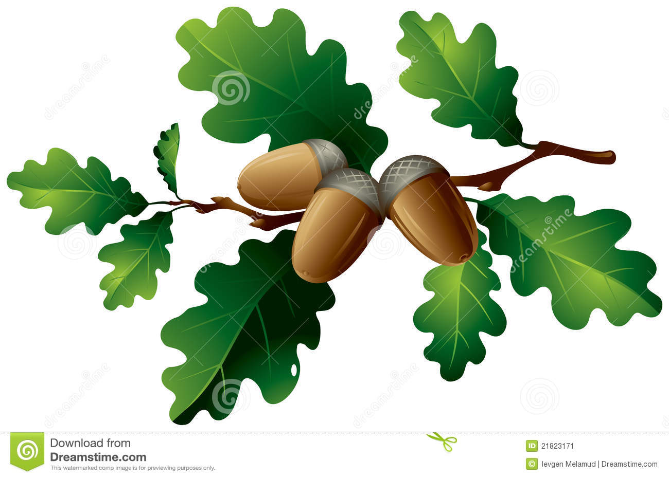 Clipart acorns oak leaves.