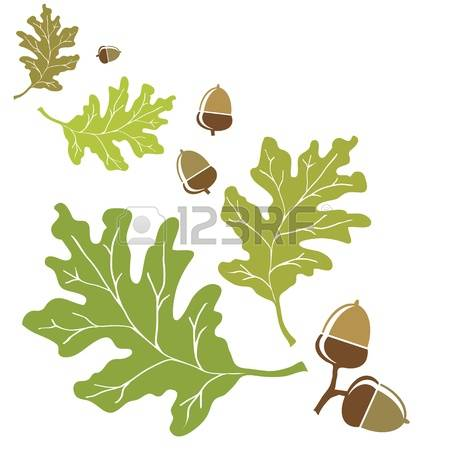 1,312 Oak Seed Stock Vector Illustration And Royalty Free Oak Seed.
