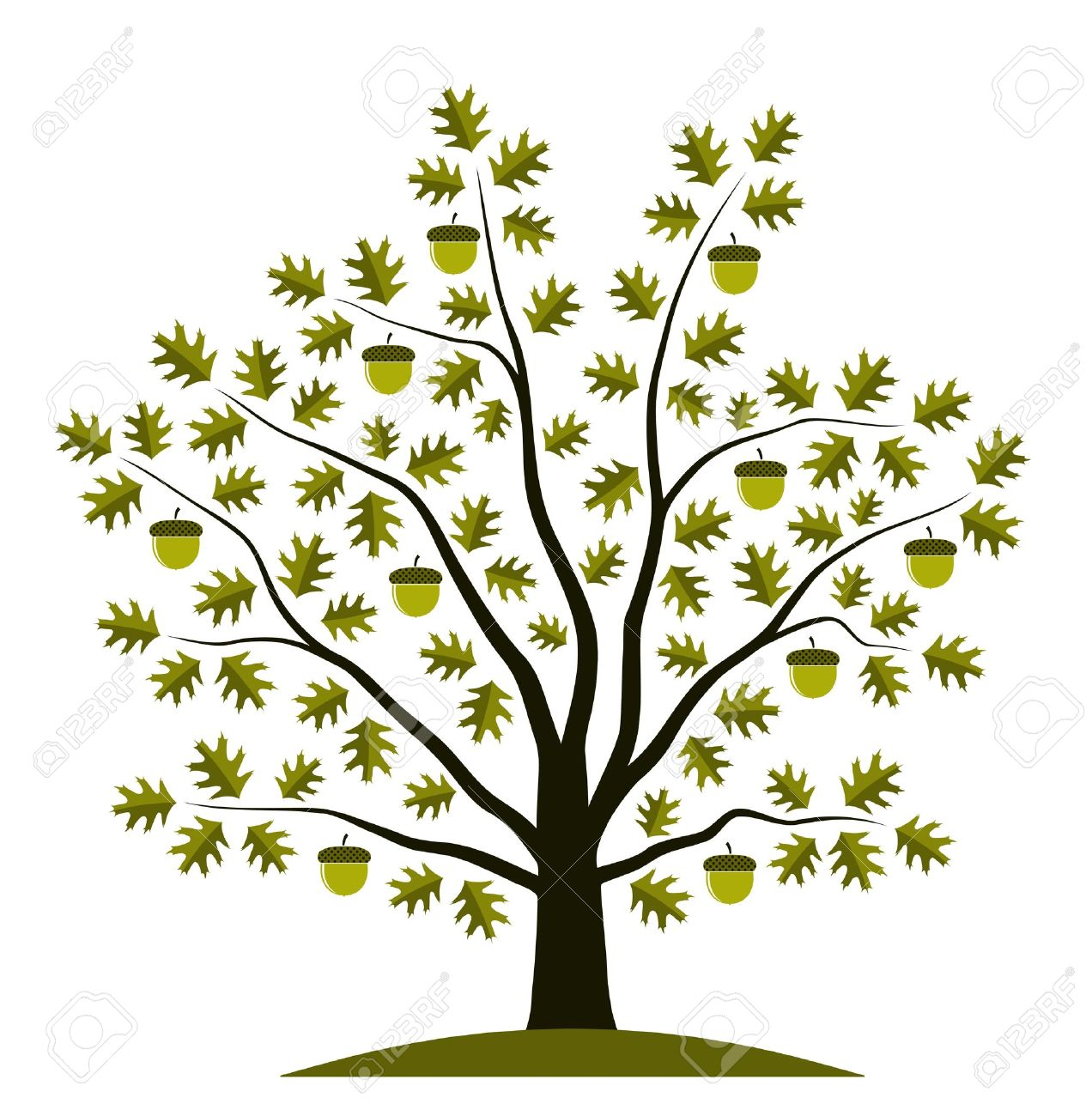 Oak tree with acorns clipart.
