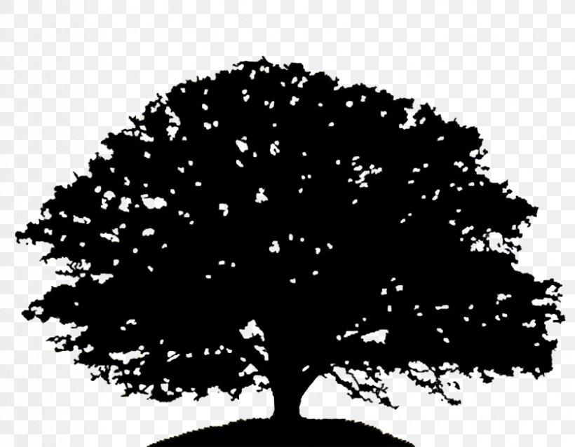 Oak Tree Silhouette Drawing Clip Art, PNG, 837x652px, Oak.