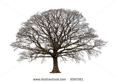Tree With No Leaves Clip Art.