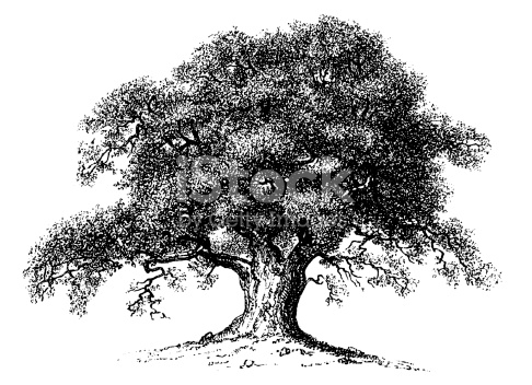 oak tree realistic clipart to add to photoshop - Clipground