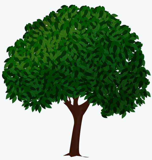 oak tree realistic clipart to add to photoshop 20 free Cliparts