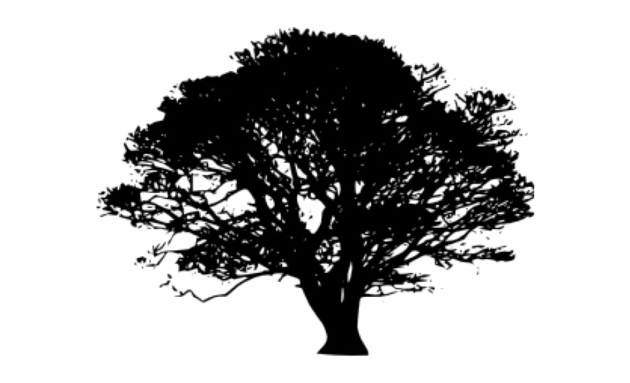 Tree Clipart Clipart Sycamore Tree.