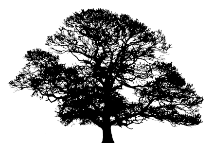Oak tree silhouette clip art clipart images gallery for free.