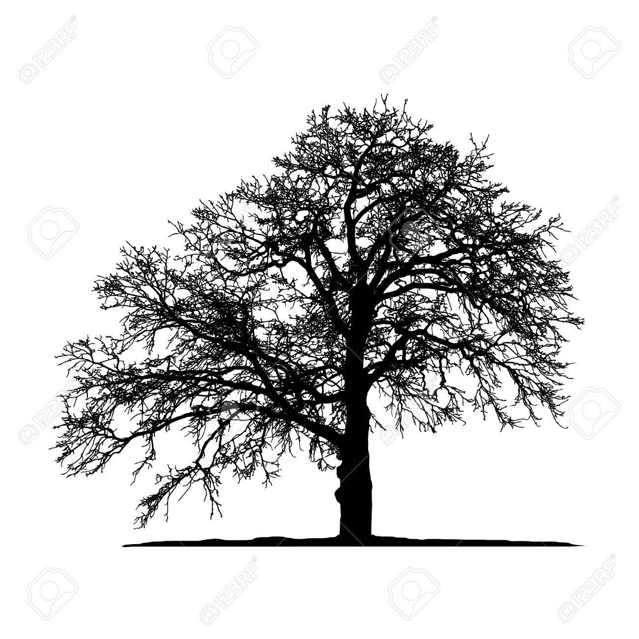 Oak Tree Silhouette Vector.