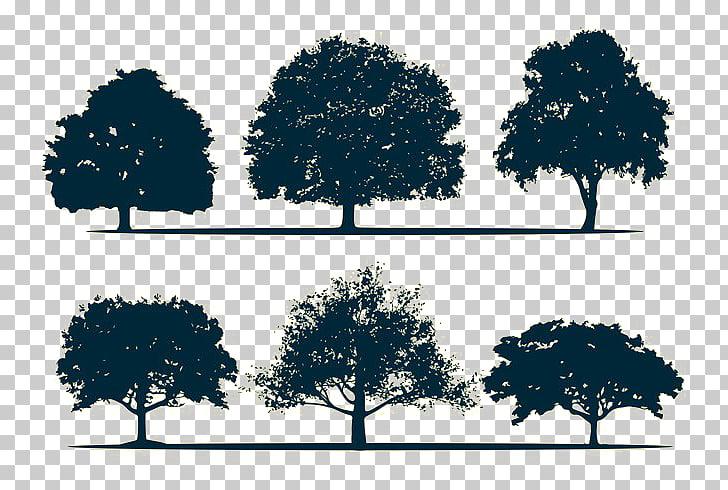 Silhouette Oak Tree, Tree Silhouette PNG clipart.