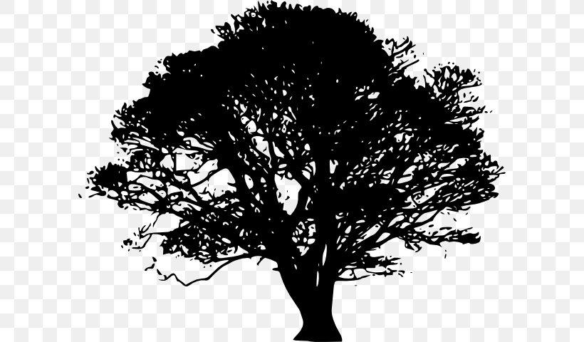 Tree Silhouette Oak Clip Art, PNG, 600x480px, Tree, Black.