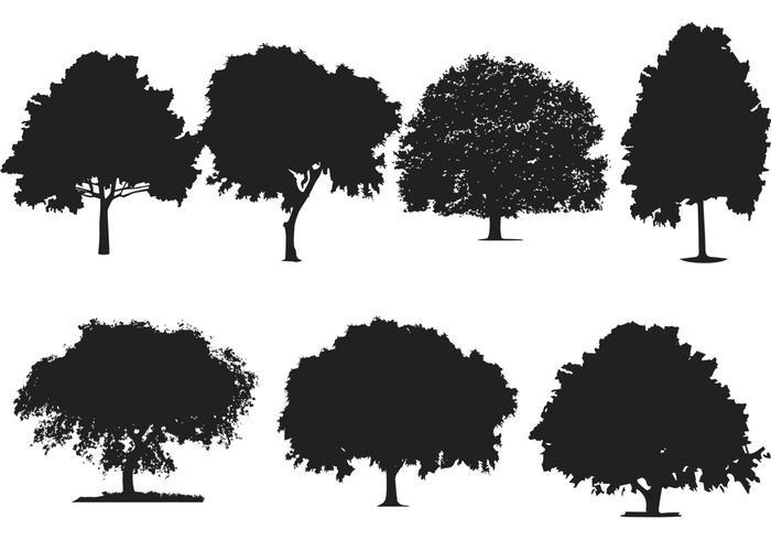 Oak Tree Silhouette Vectors.