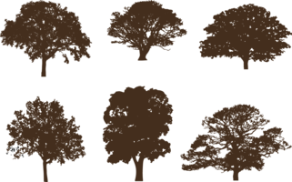 Oak Tree Free Vector Art.