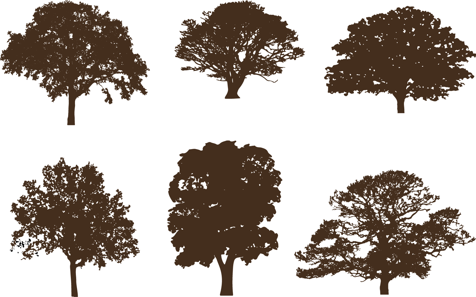 Oak Silhouette Clip art Vector graphics Tree.