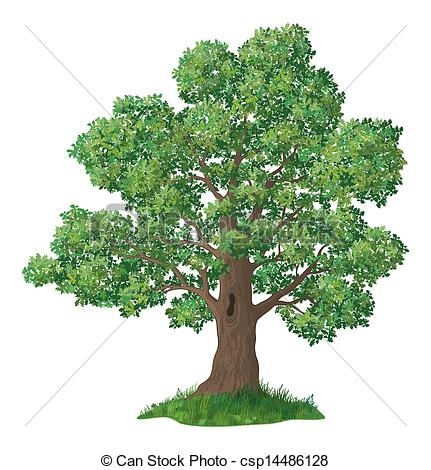Oak trees Clip Art and Stock Illustrations. 14,436 Oak trees EPS.