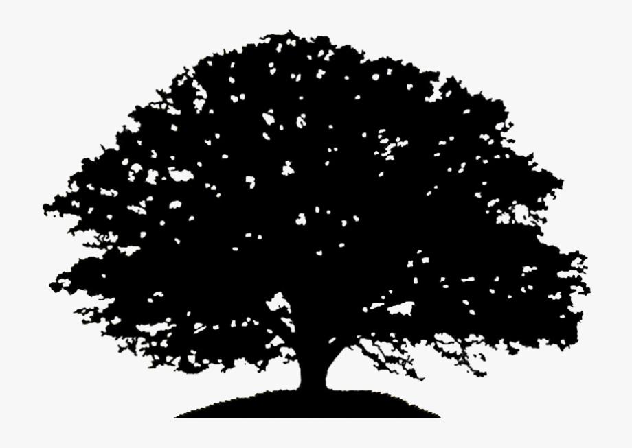 Pin Oak Tree Clipart Black And White.