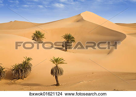 "Stock Photo of ""Um el Ma Oasis, date palms and sand dunes, Libyan."