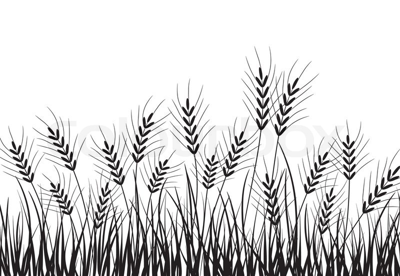 Grass and ears, vector illustration.